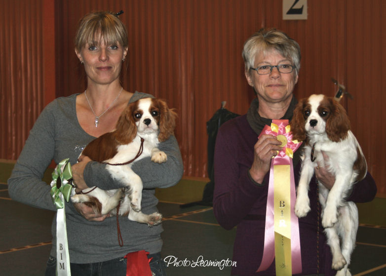 Lazycroft's Cluedo and Lazycroft's Capucine winning BIS and BOS. Judge Laila Länsberg Larson, Rodero's Cavaliers Sweden